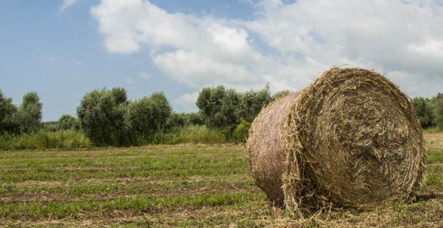 Cessioni-Azienda agricola zona Avellino